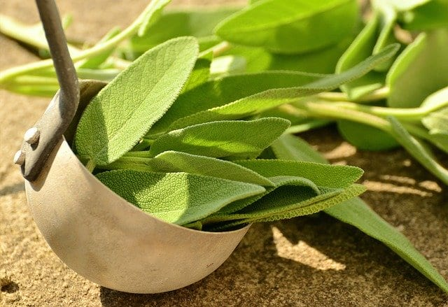 Sage - Not Just for Flavoring